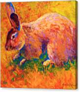 Cottontail I Canvas Print