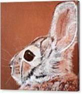 Cottontail  Canvas Print