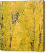 Cottonwood Autumn Colors Canvas Print