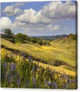 Cottonwood Canyon Canvas Print