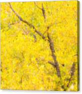 Cottonwood Colors  Canvas Print