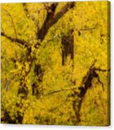 Cottonwood Fall Foliage Colors Abstract Canvas Print