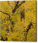 Cottonwood Fall Foliage Colors Canvas Print