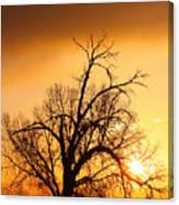 Cottonwood Sunrise - Vertical Print Canvas Print