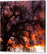 Cottonwood Sunset Silhouette Canvas Print