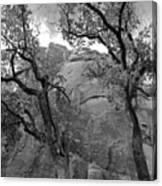Cottonwood Trees-zion Canvas Print