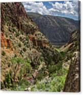 Cottonwoods In The Canyon Canvas Print