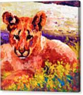 Cougar Cub Canvas Print