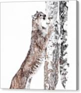 Cougars Tree Canvas Print