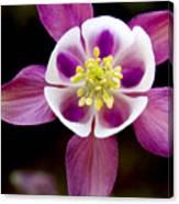 Coumbine Blossom Canvas Print