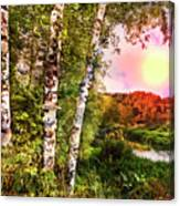 Country Birch Canvas Print