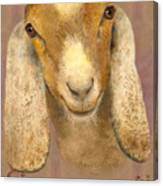 Country Charms Nubian Goat With Bright Eyes Canvas Print