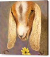 Country Charms Nubian Goat With Daisy Canvas Print