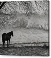 Country Horse Canvas Print