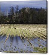 Country Living Eh Canvas Print