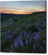 Country Meadow Sunset Canvas Print