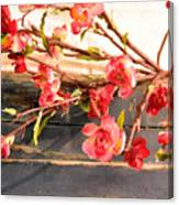 Country Quince Canvas Print