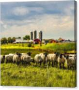 Country Sheep Canvas Print