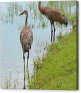 Couple Of Sandhills By Pond Canvas Print