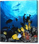 Couple Snorkels At Surfac Canvas Print