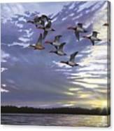 Courtship Flight Canvas Print