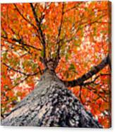 Covered In Fall Canvas Print