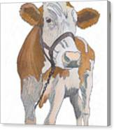 cow Canvas Print