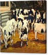 Cow Barn Canvas Print