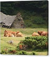 Cow Family Pastoral Canvas Print