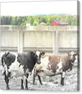 In The Future We Will Have No Cow Fence  Canvas Print