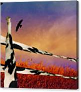 Cow Fence Canvas Print
