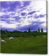 Cow Field Canvas Print