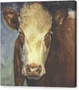Cow Portrait II Canvas Print