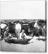 Cowboys Branding Cattle C. 1900 Canvas Print