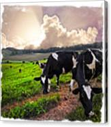 Cows At Sunset Bordered Canvas Print