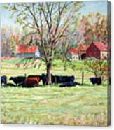 Cows Grazing In One Field  Canvas Print