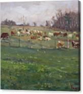 Cows In A Farm, Georgetown  Canvas Print