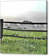 Cows In Field Canvas Print