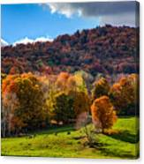 Cows In Pomfret Vermont Fall Foliage Canvas Print
