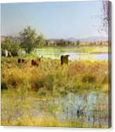Cows In The Desert Canvas Print