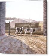 Cows In The Middle Canvas Print