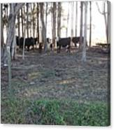 Cows In The Woods Canvas Print