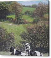 Cows Sitting By Hill Relaxing Canvas Print