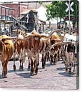 Cowtown Stockyards Canvas Print