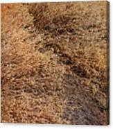 Coyote Brush Canvas Print