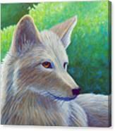 Coyote Charisma Canvas Print