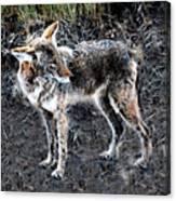 Coyote Waits Canvas Print