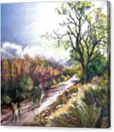 Coyotes In Placerita Canyon Canvas Print