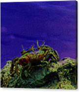 Crab Cakez 5 Canvas Print