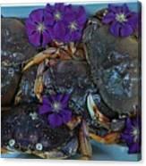 Crab Feed Canvas Print